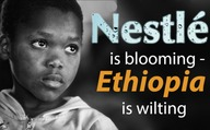 Nestlé is blooming - Ethiopia is wilting