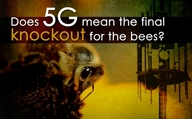 Does 5G mean the final knockout for the bees?